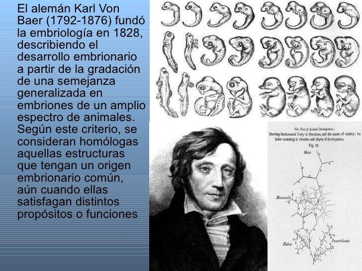 <ul><li>El alemán Karl Von Baer (1792-1876) fundó la embriología en 1828, describiendo el desarrollo embrionario a partir ...