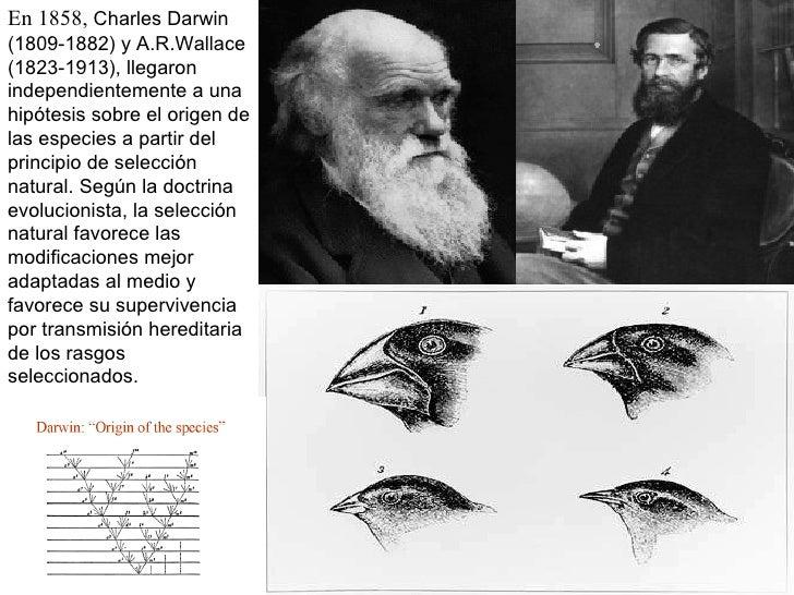 En 1858,  Charles Darwin (1809-1882) y A.R.Wallace (1823-1913), llegaron independientemente a una hipótesis sobre el orige...