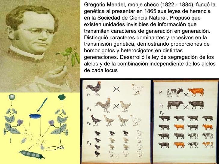 Gregorio Mendel, monje checo (1822 - 1884), fundó la genética al presentar en 1865 sus leyes de herencia en la Sociedad de...