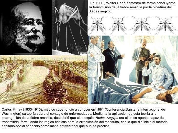 En 1900 , Walter Reed demostró de forma concluyente la transmisión de la fiebre amarilla por la picadura del  Aëdes aegypt...