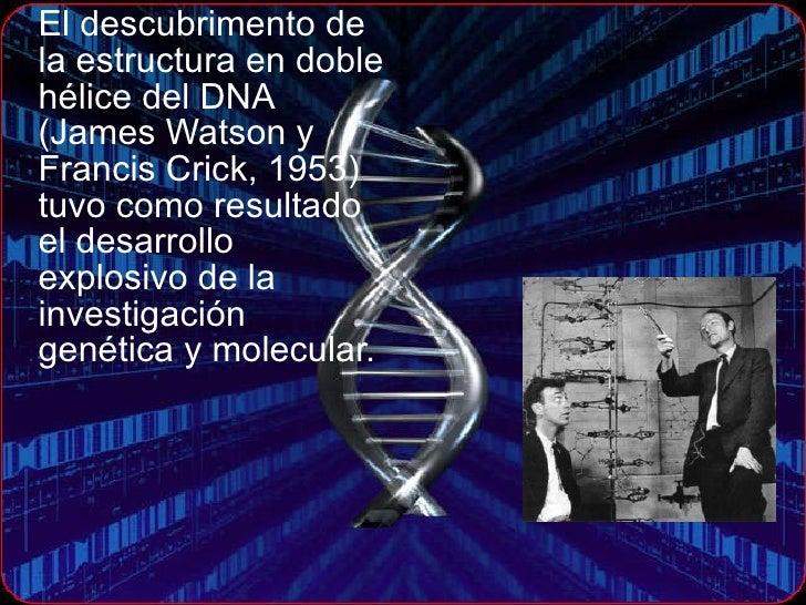 <ul><li>El descubrimento de la estructura en doble hélice del DNA (James Watson y Francis Crick, 1953)  tuvo como resultad...