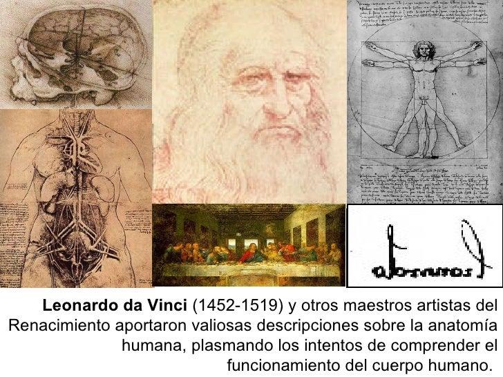 Leonardo da Vinci  (1452-1519) y otros maestros artistas del Renacimiento aportaron valiosas descripciones sobre la anatom...