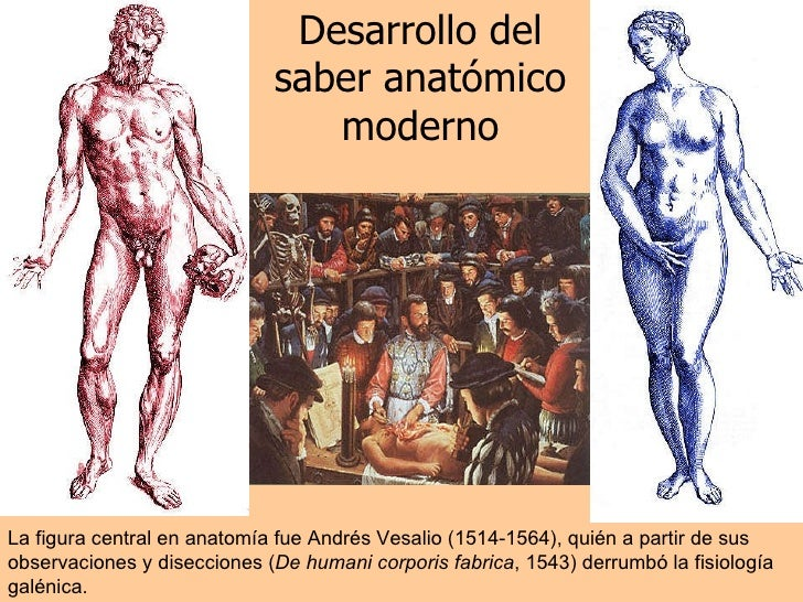 Desarrollo del saber anatómico moderno La figura central en anatomía fue Andrés Vesalio  (1514-1564), quién a partir de su...
