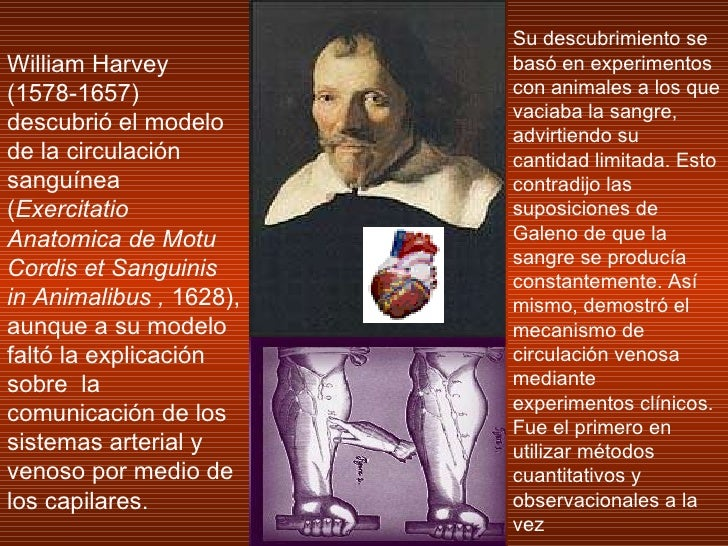 William Harvey (1578-1657)  descubrió el modelo de la circulación sanguínea ( Exercitatio Anatomica de Motu Cordis et Sang...