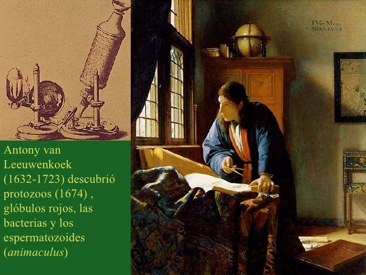 Antony van Leeuwenkoek (1632-1723) descubrió protozoos (1674) , glóbulos rojos, las bacterias y los espermatozoides ( anim...