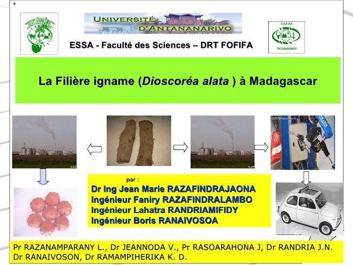 ESSA - Faculté des Sciences – DRT FOFIFA <ul><li>La Filière igname ( Dioscoréa alata  )  à Madagascar </li></ul>par:  Dr ...