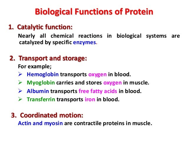 the biological description of proteins and its function Lipids: definition, classification and functions  during growth they are utilized as bricks for construction of biological  the function of which is to.