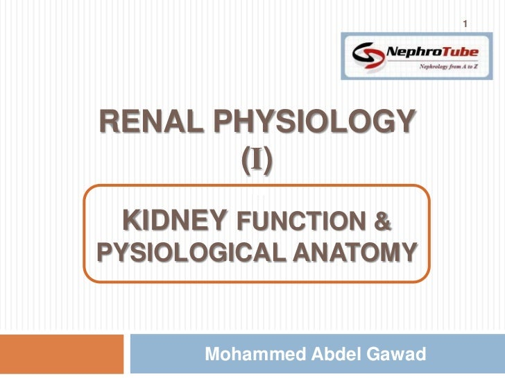 1RENAL PHYSIOLOGY       (I)         m KIDNEY FUNCTION &PYSIOLOGICAL ANATOMY      Mohammed Abdel Gawad