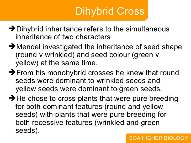dihyrbid cross Start studying bio 101 chapter 13 learn vocabulary, terms, and more with flashcards, games,  a dihybrid cross of two contrasting pure-breeding organisms.