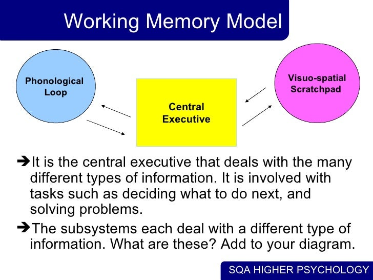 working memory model psychology Using the highly influential working memory framework as a guide, this textbook   cognitive development, lifespan & developmental psychology (general)  of  the original and revised versions of the 'working memory model' (baddeley,.