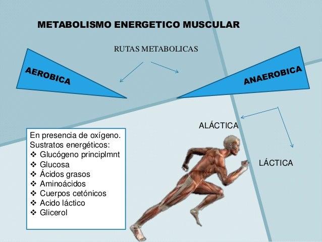 Cuatro métodos de no valor para obtener extra con Metabolismo basale