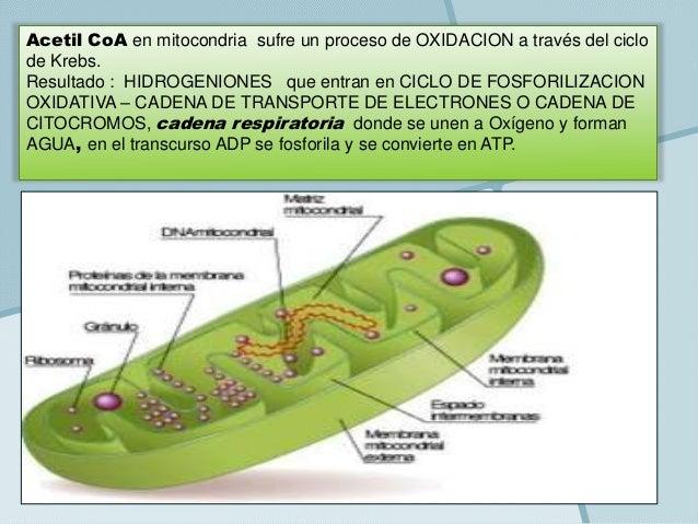 1-Metabolismo Energético Muscular