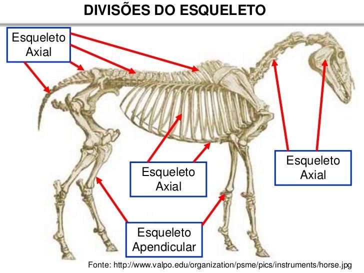 Atractivo Anatomía Del Esqueleto Canino Molde - Anatomía de Las ...
