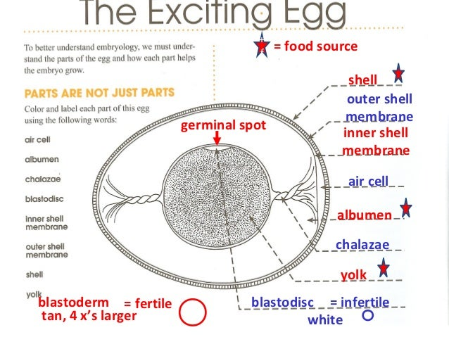1 Page 4 Egg Diagram