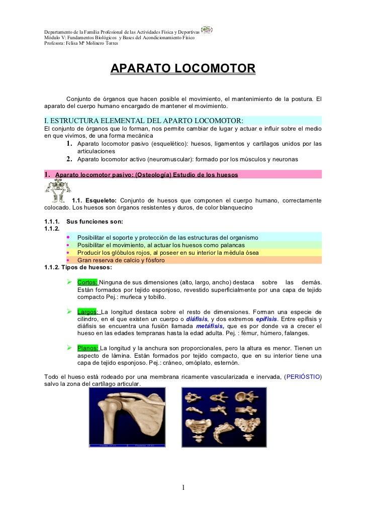 1º Parte Anatomia Para El Movimiento