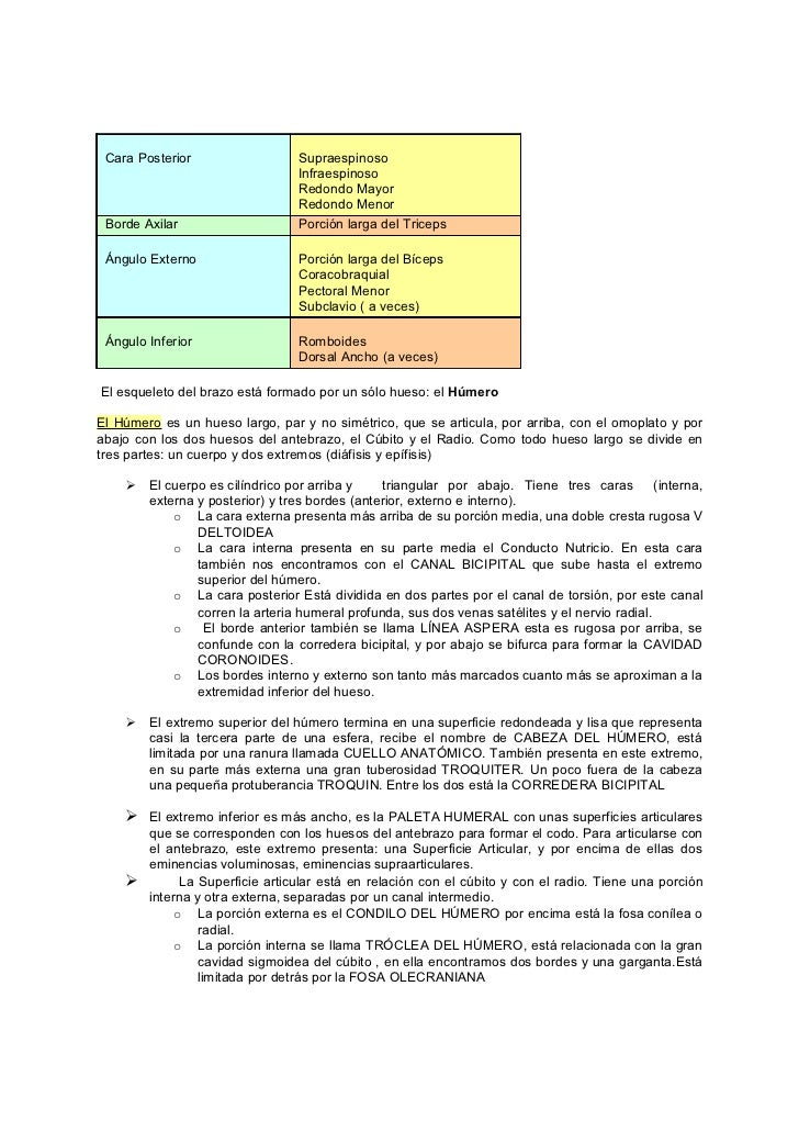 Bonito Hueso Letras De Canciones Anatomía Bosquejo - Imágenes de ...
