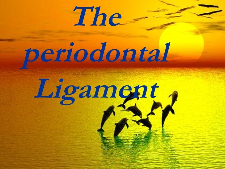 Theperiodontal Ligament