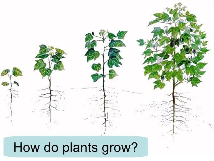 1. Plant Growth