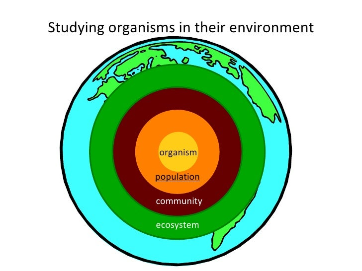 Studying organisms in their environment biosphere ecosystem community population organism