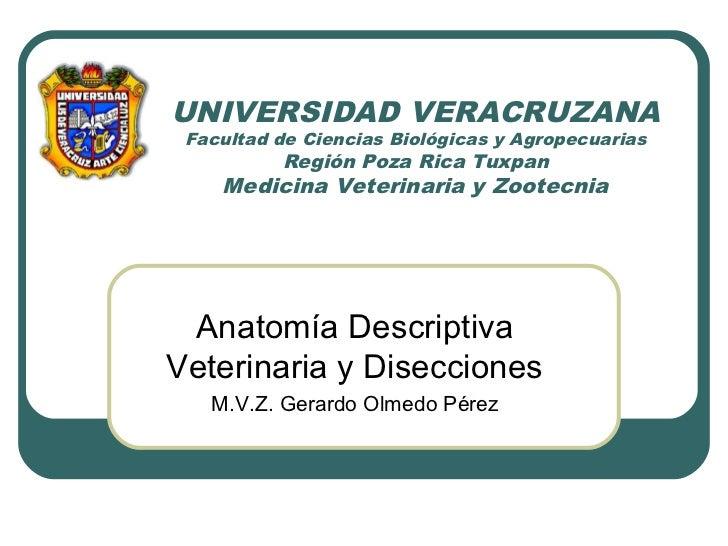 UNIVERSIDAD VERACRUZANA  Facultad de Ciencias Biológicas y Agropecuarias           Región Poza Rica Tuxpan     Medicina Ve...