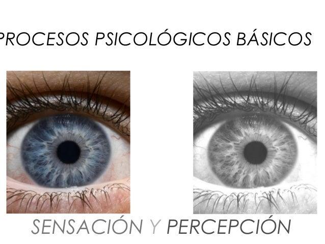PROCESOS PSICOLÓGICOS BÁSICOS   SENSACIÓN Y PERCEPCIÓN