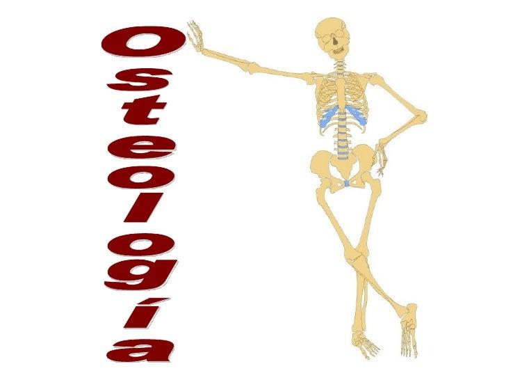 A Leonardo Da Vinci se le reconoce como el  primer anatomista que ilustró en forma correcta el esqueleto con sus 206 huesos.