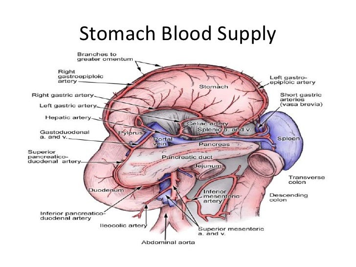 1 stomach stomach ccuart Image collections
