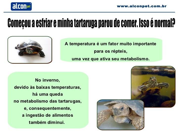 Começou a esfriar e minha tartaruga parou de comer. Isso é normal? A temperatura é um fator muito importante  para os répt...