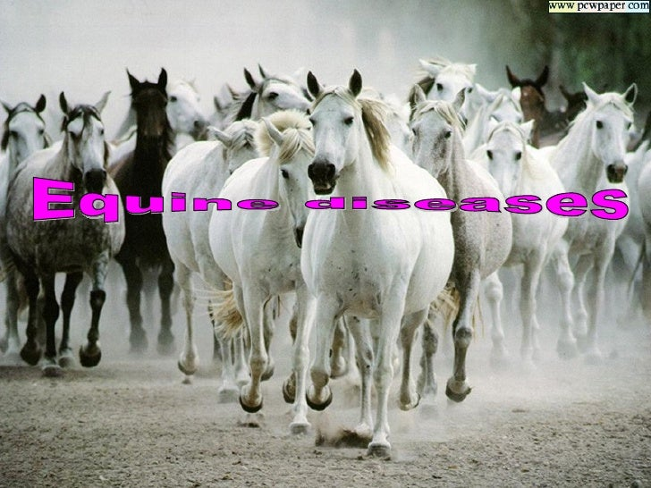 .Vesicular stomatitis -1.Rota virus -2.Equine influenza -3.African horse sickness -4.Equine viral rhinopnumonitis -5.Equin...
