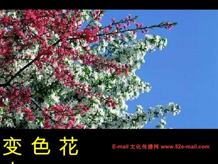 变 色 花 卉 E-mail 文化传播网 www.52e-mail.com