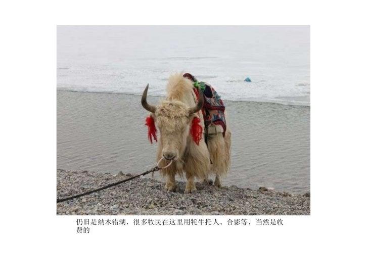<ul><li>仍旧是纳木错湖,很多牧民在这里用牦牛托人、合影等,当然是收费的  </li></ul>
