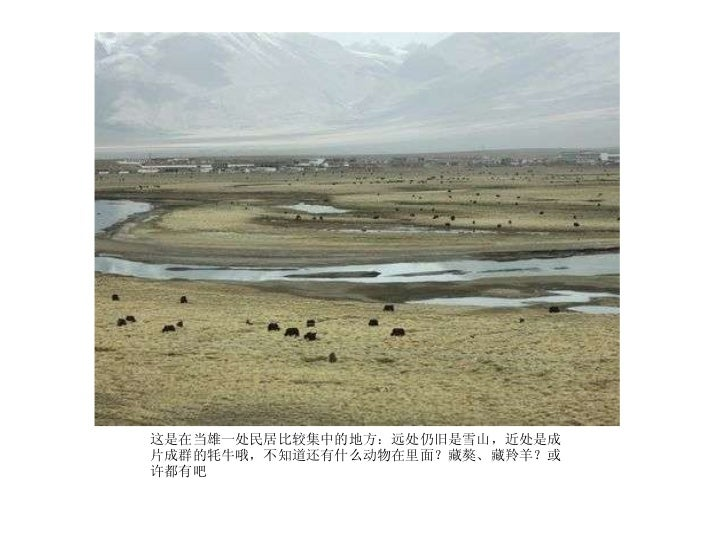 <ul><li>这是在当雄一处民居比较集中的地方:远处仍旧是雪山,近处是成片成群的牦牛哦,不知道还有什么动物在里面?藏獒、藏羚羊?或许都有吧  </li></ul>