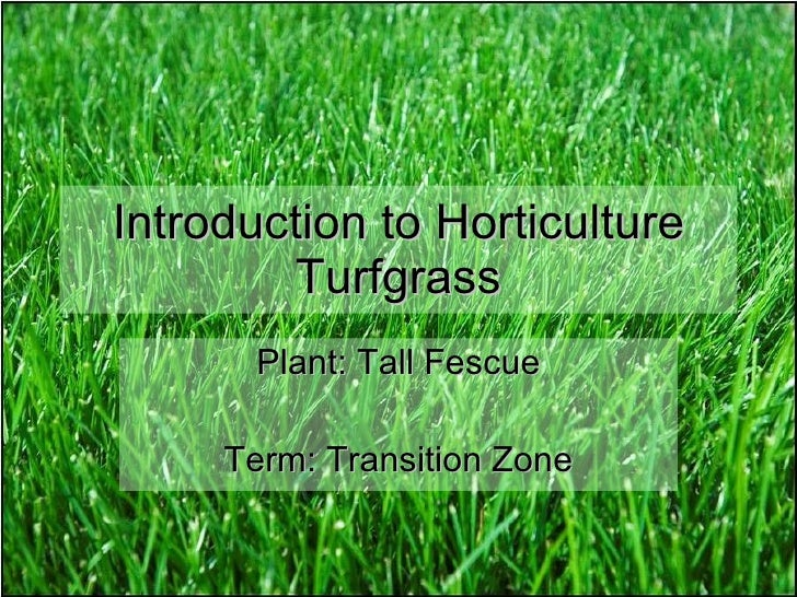 Introduction to Horticulture Turfgrass Plant: Tall Fescue Term: Transition Zone