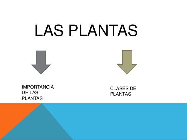 LAS PLANTAS IMPORTANCIA DE LAS PLANTAS CLASES DE PLANTAS