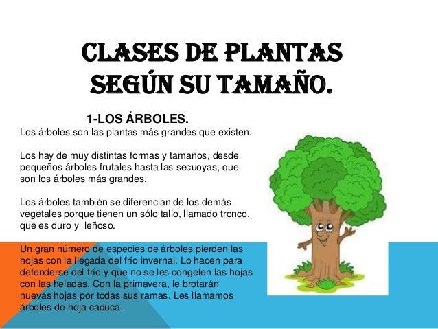 Las plantas impotancia y clases - Cuales son las plantas con flores ...