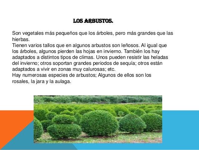 Las plantas impotancia y clases for Especies de arbustos