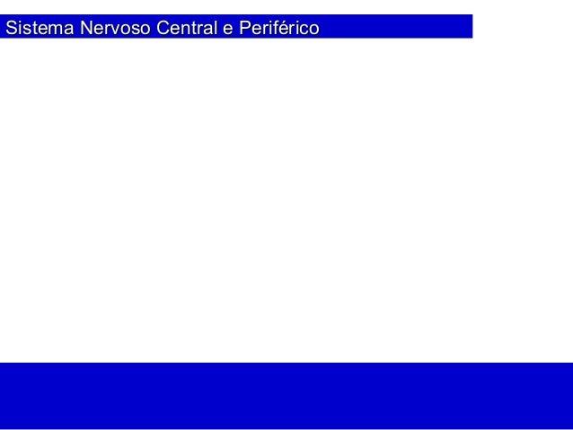 Sistema Nervoso Central e PeriféricoSistema Nervoso Central e Periférico