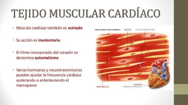 10. Tejido Muscular cap10