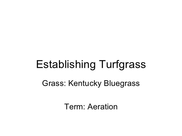 Establishing Turfgrass Grass: Kentucky Bluegrass Term: Aeration