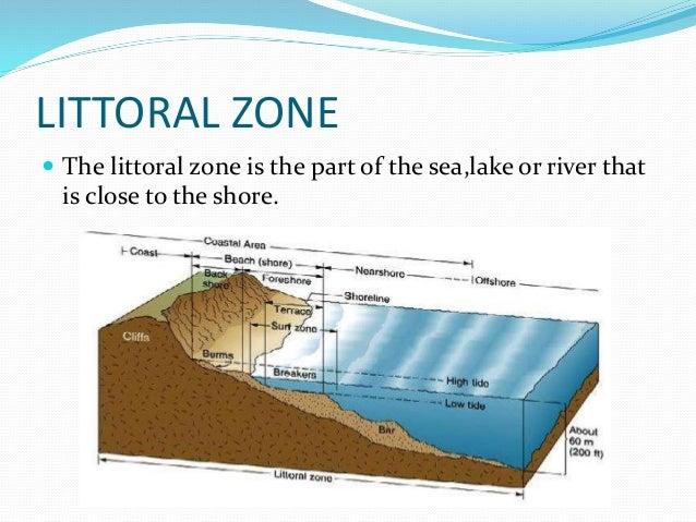 10. littoral zone