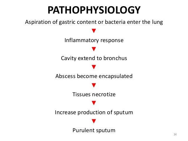 tb pneumonia diagram pneumonia lung diagram pneumonia