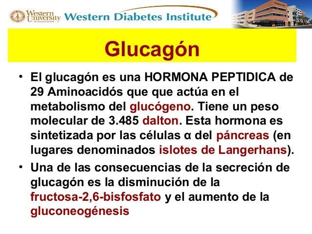 Explicando parte del Octeto fisiopatológico en Diabetes