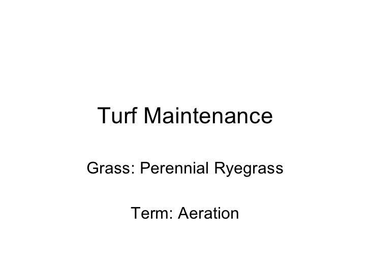 Turf Maintenance Grass: Perennial Ryegrass Term: Aeration