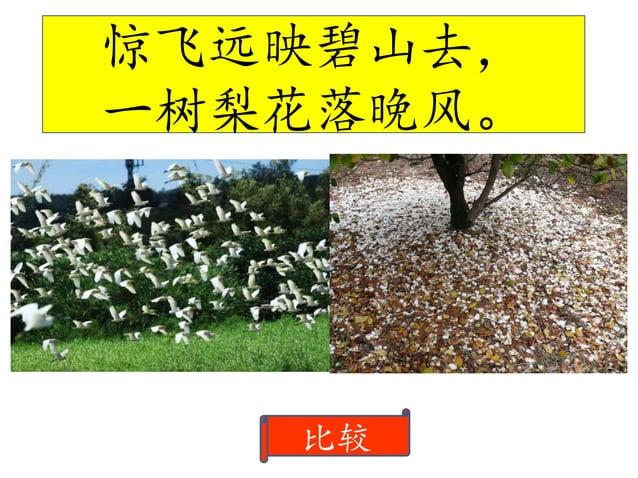 梨花 指鹭鸶飞翔的姿态。 开阔整首诗的境界,使整首诗看 起来更具美感。