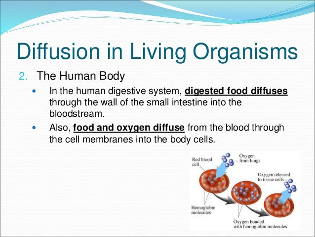 """transport in living organisms Active transport requires energy it is most commonly accomplished by having a transport protein which changes shape when it binds with the cell's """"fuel,"""" a."""
