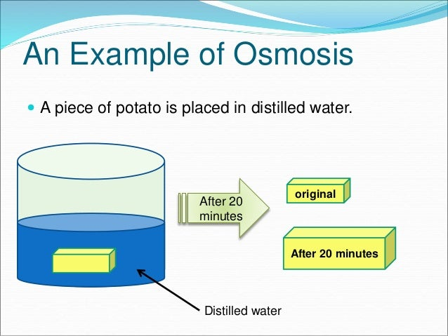 10 Transport System In Organisms E Learning Diffusion Osmosis