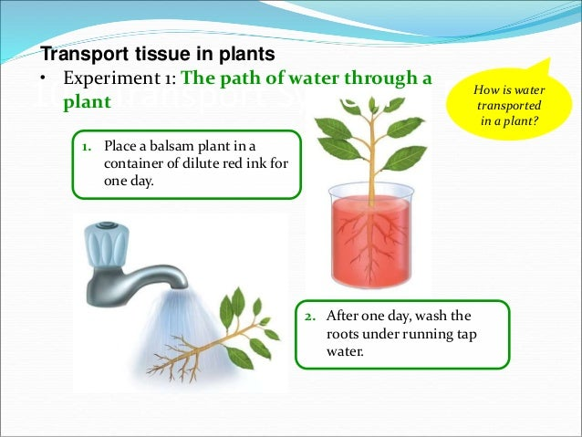 10 transport system in organisms e learning diffusion osmosis plants 38 39 ccuart Choice Image