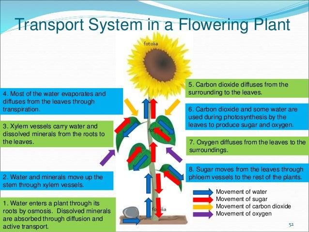 Plant Osmosis Diagram Wiring Diagram