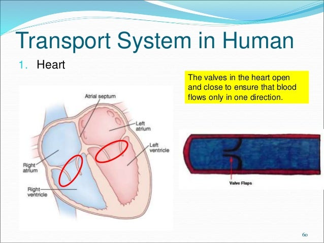 transport system of organisms Anaerogro™ anaerobic transport media systems contain sodium thioglycollate as a reducing agent resazurin is an oxygen indicator that will turn pink if the anaerobic condition within the tubes has been compromised.