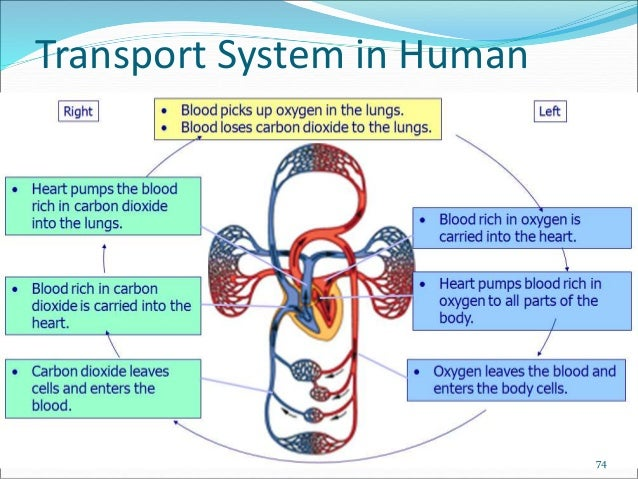 transport system of organisms Study reports the first application of electron transport system (ets) activity to  estimate  electron transport systems in marine organisms have.
